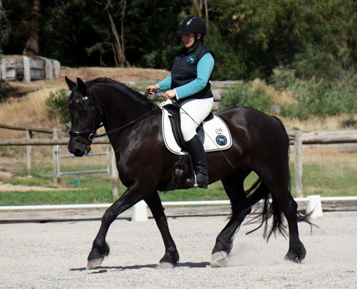 Friesian Horses For Sale in Guisborough Classifieds Free Ads West